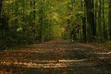 Jesień - moja ulubiona pora roku na zdjęcia